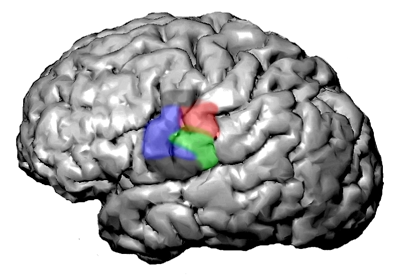 the concept of pattern recognition of the human brain Human pattern recognition and perception neurobiology of brain plasticity and pattern recognition pattern recognition.